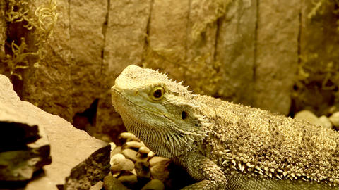 lizard in the Aquarium Footage