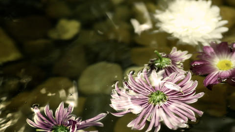 flowers on the water Stock Video Footage
