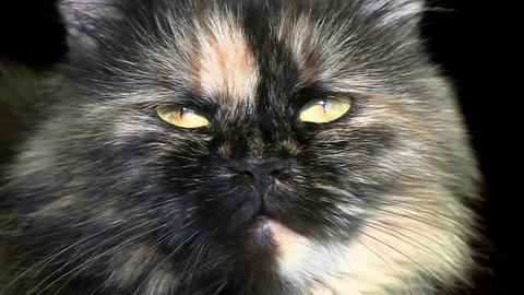 Close-up of cat muzzle over black background Stock Video Footage