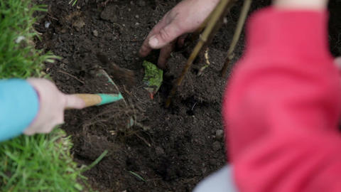 Close up on burying just planted seedling Footage