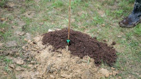 Adding Fresh Soil To Plantation Of Raspberries stock footage
