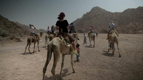 Group of tourists is riding the camels Footage