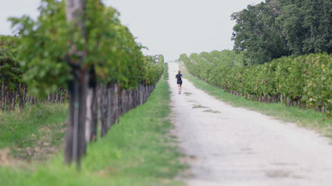 Detail Pan Shot Of Grape Vines With Shallow Focus stock footage