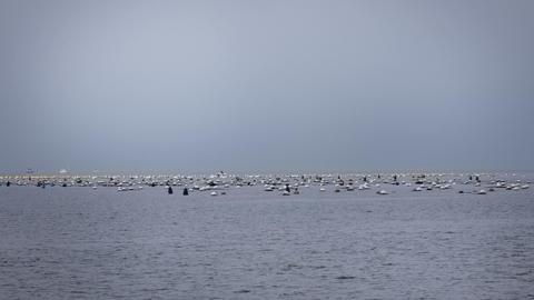 Static shot of horizont full of sailboats and vari Footage