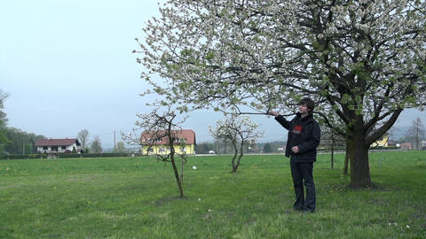 Man standing underneath blossoming tree Footage