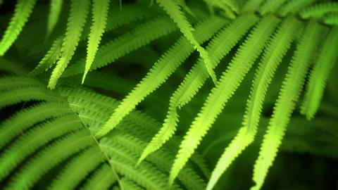 Fern Leaves Swaying In The Tropical Forest stock footage