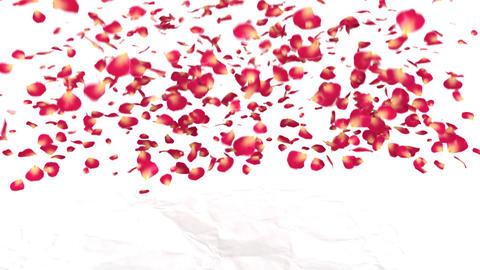 love flower Stock Video Footage