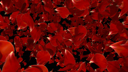 petal fall Stock Video Footage