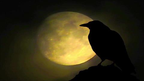 Crow 3 Animation
