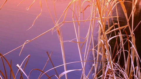 cane river at sunset Stock Video Footage