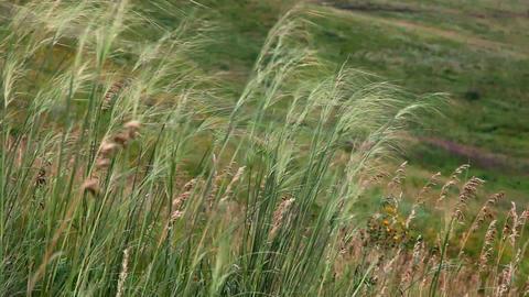 Prairie grass Footage
