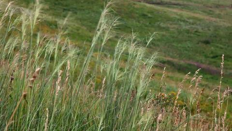 Prairie grass Stock Video Footage