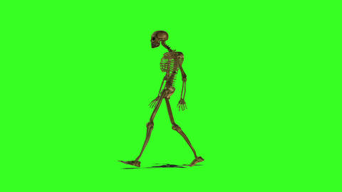 Skeleton 2 Animation