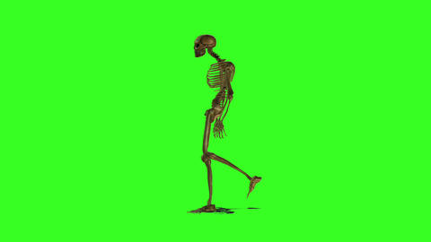Skeleton 2 Stock Video Footage