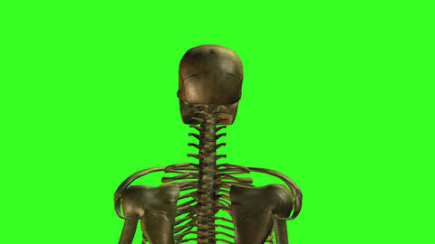 Skeleton 8 Stock Video Footage