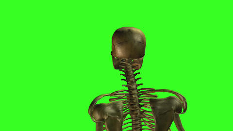 Skeleton 8 Animation