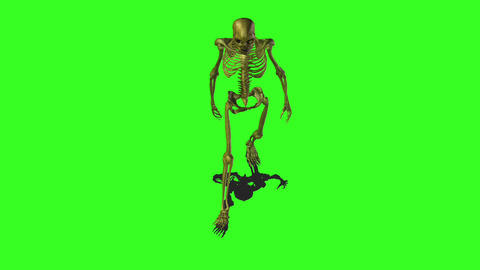 Skeleton 6 Stock Video Footage