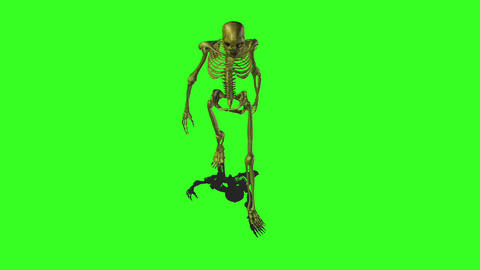 Skeleton 6 Animation