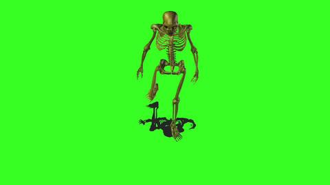 Skeleton 6 Stock Video Footage