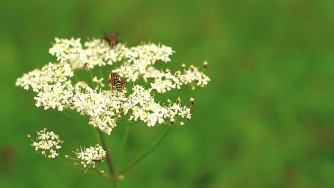 Bugs On Wild Flower 01 ภาพไม่มีลิขสิทธิ์