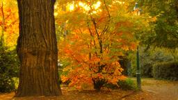 Fall 09 Footage
