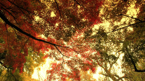 Fall ARTCOLORED 01 Stock Video Footage