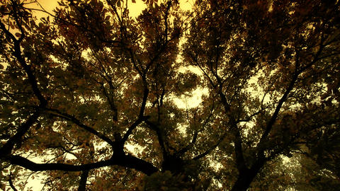 Fall ARTCOLORED 04 Stock Video Footage