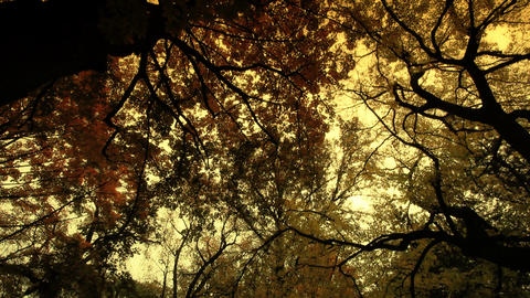 Fall ARTCOLORED 06 Stock Video Footage