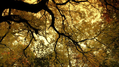 Fall ARTCOLORED 08 Stock Video Footage