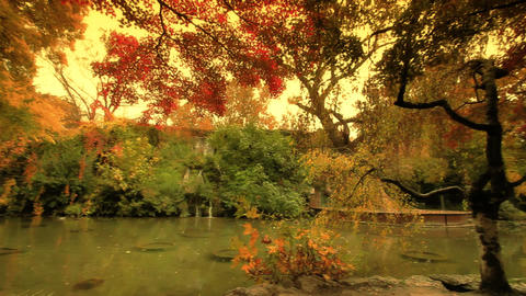 Japanese Garden Fall ARTCOLORED 02 Footage
