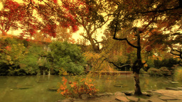 Japanese Garden Fall ARTCOLORED 02 Stock Video Footage