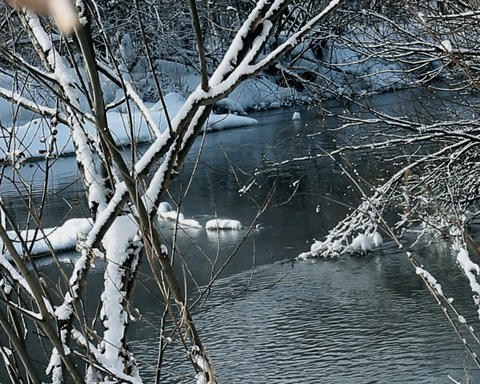 River in winter forest Footage