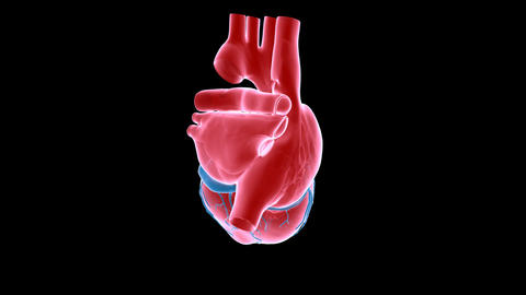 heart xray right Stock Video Footage