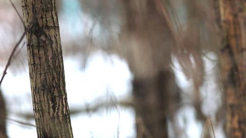 2166 Focus on Leaf HD J96 Stock Video Footage