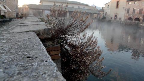 dead plant near water in morning mist Stock Video Footage