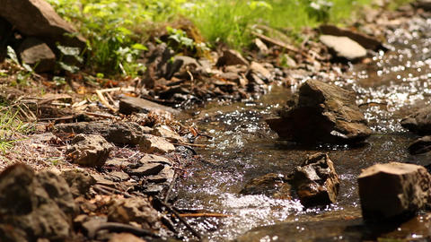 stream in a wood Stock Video Footage
