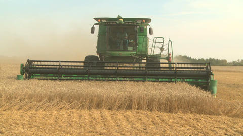 Wheat harvesting with combine 01 Live Action