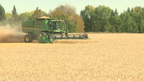 Wheat harvesting with combine 010 Live Action