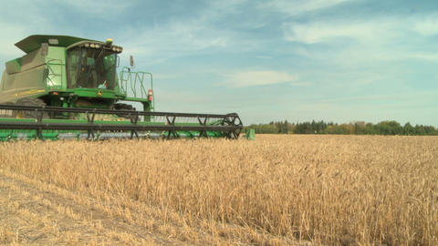 Wheat harvesting with combine 012 Live Action