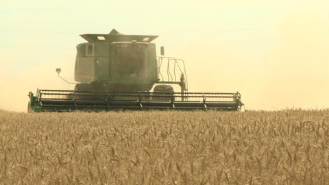 Wheat harvesting with combine 014 Live Action