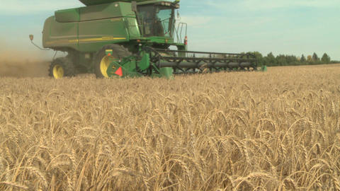 Wheat harvesting with combine 016 Live Action