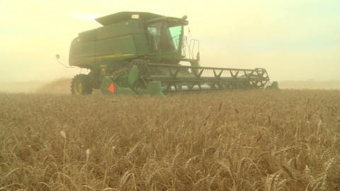 Wheat harvesting with combine 019 Live Action