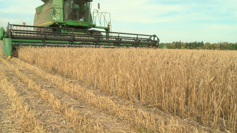 Wheat harvesting with combine 020 Live Action
