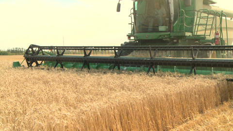 Wheat harvesting with combine 03 Live Action