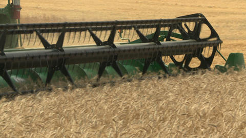 Wheat harvesting with combine cu 07 Live Action