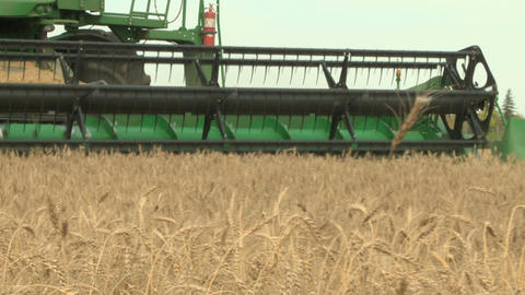 Wheat harvesting with combine cu 017 Footage