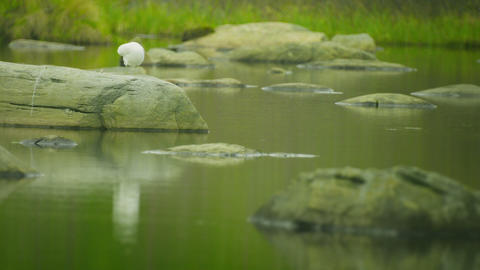 White seagull sitting on a stone at the northern l Footage