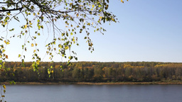 Autumn landscape with river and birch branch Footage