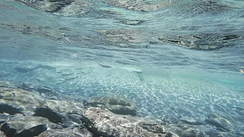 Fish Racing Along The Surface In Shallow Water stock footage