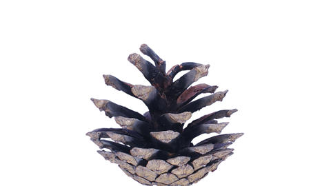 Time-lapse Of Opening Pine Cone With ALPHA 1a1 stock footage